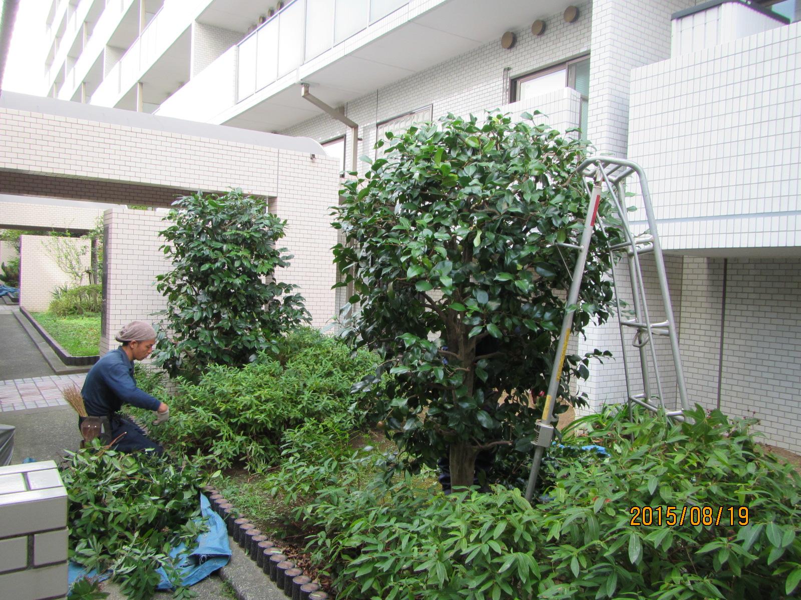 植栽管理(マンション)