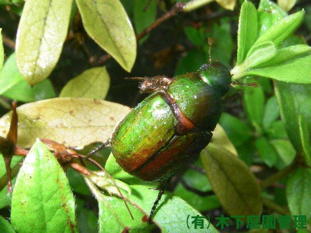 庭で見かける虫