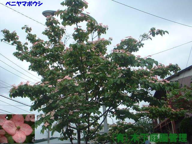 樹木サンプル