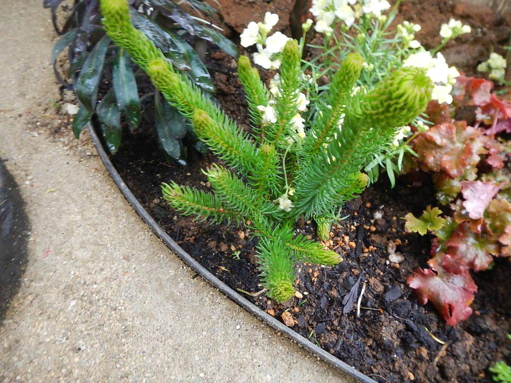 花壇の草花