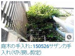 No.005 カンツバキ、サザンカ①150526