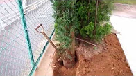 No.057 庭木の植え方①列植180615
