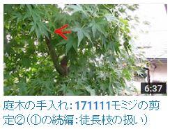 171111モミジ②