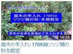170930ツツジ類(秋冬)