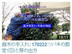 No.040 ツバキ①170222