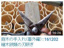 161202植木鋏の研ぎ方