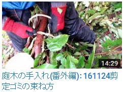No.019 剪定ゴミの束ね方161124