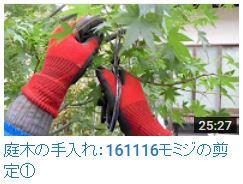 No.025 モミジ剪定①161116