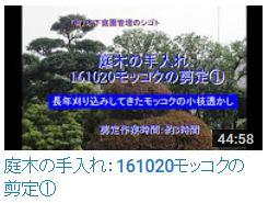 No.017 モッコク剪定①161020