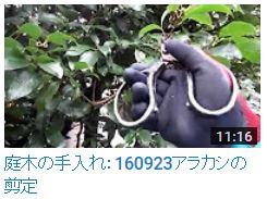 No.015 アラカシ剪定160923