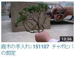 No.009 チャボヒバ剪定151107
