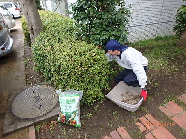灌木への配合肥料表土すき込み